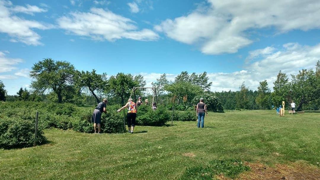 auto-cueillette de camerises lors d'une visite à la ferme
