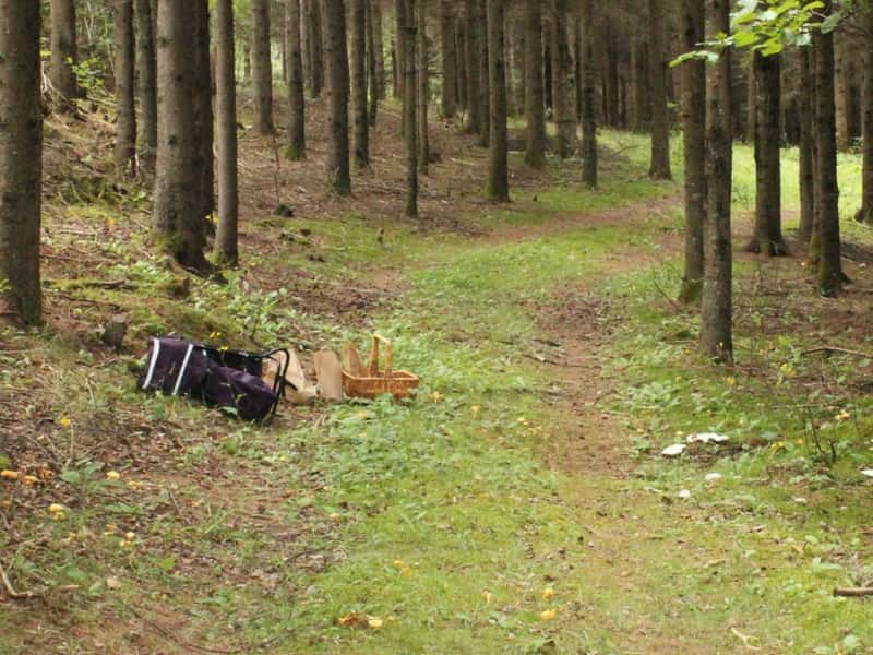 Sentier en forêt et panier pour cueillette de champignons