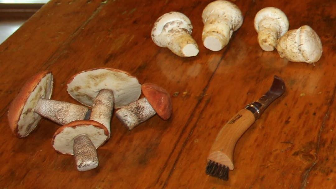 champignons et couteau Opinel sur table en bois antique