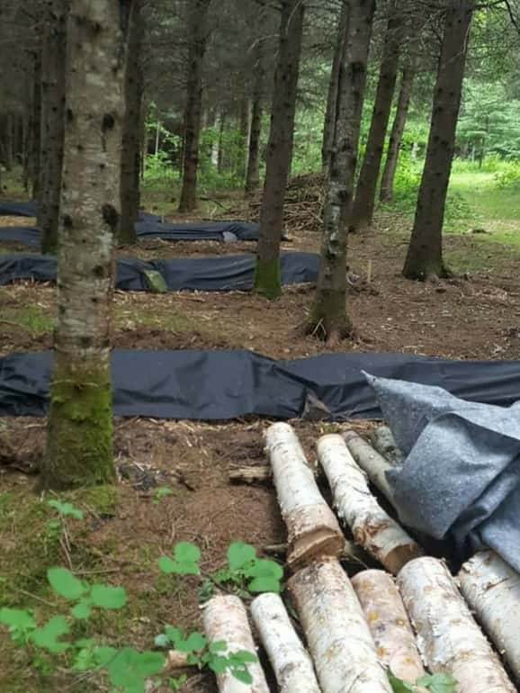Culture de champignons en forêt